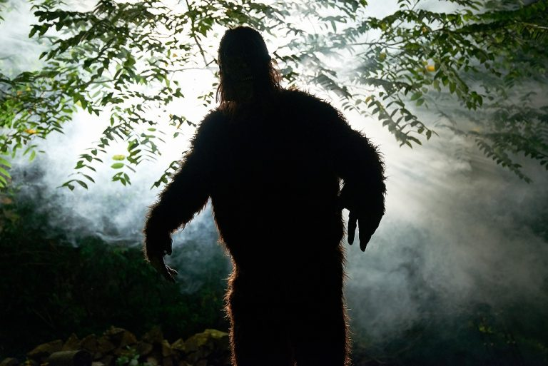 Washington Laws Make It Illegal to Kill Bigfoot